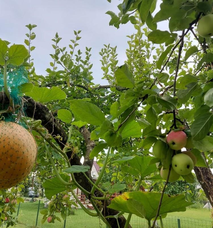 Gyvybės ratas: sodo-daržo tituluotieji
