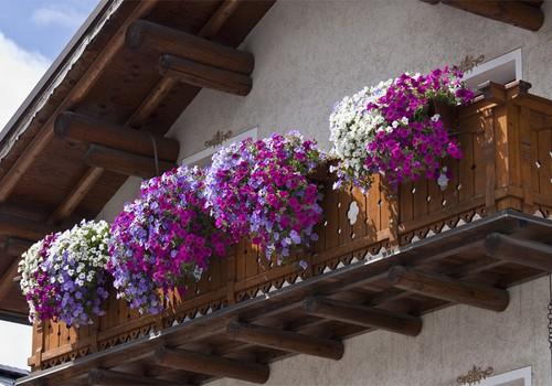 5 patarimai, kuriant gėlių kompozicijas balkone