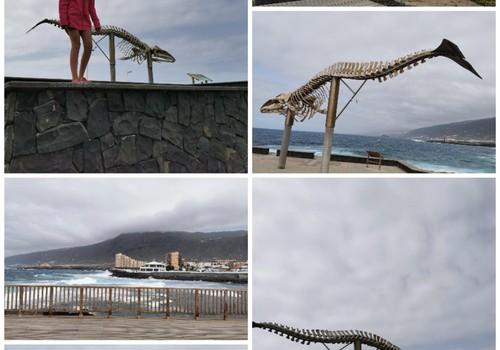 Vasaros gidas: Banginio griaučiai (Tenerifė)