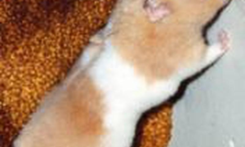 Draudžiama prekiauti išbandyta su gyvūnais kosmetika