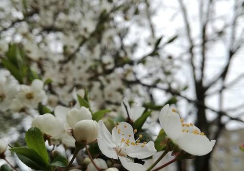 Pabaiga ir nauja pradžia! Pagaliau pavasaris :)