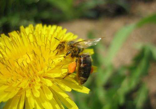 Mamos patarimai, kaip apsiginti nuo vabzdžių įgėlimo