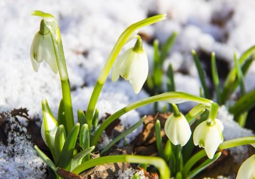 Pavasario konkursas: Laimėk prabangią dovaną namams!