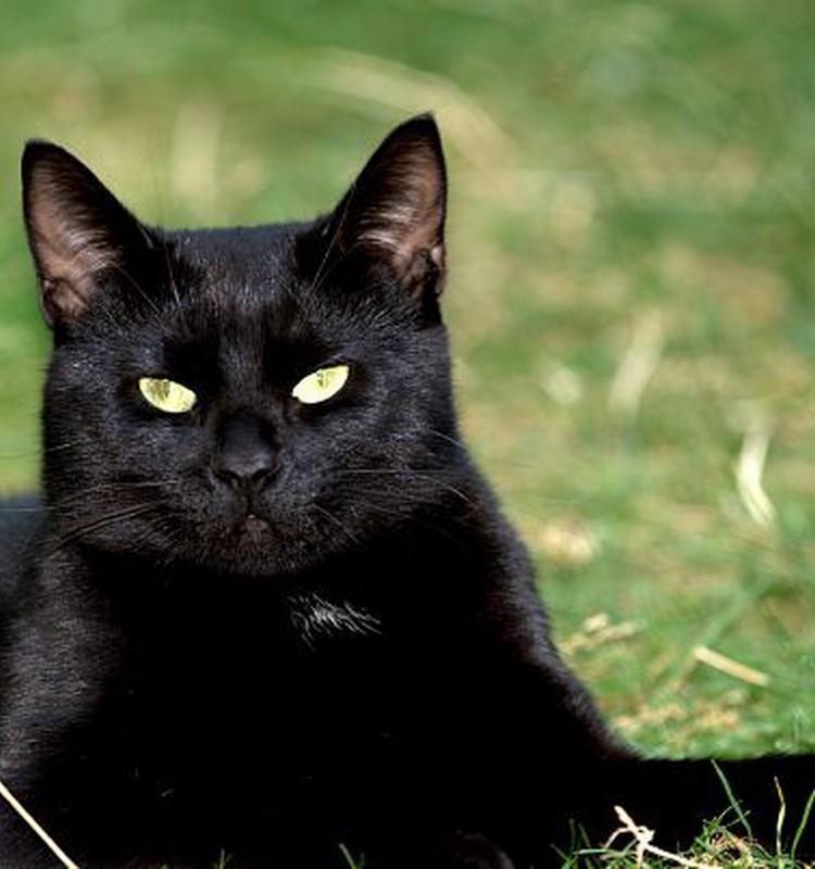 Juodos katės paslaptis :)