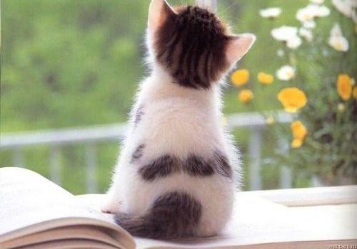 Kaip katinėlis bandė parnešti saulę