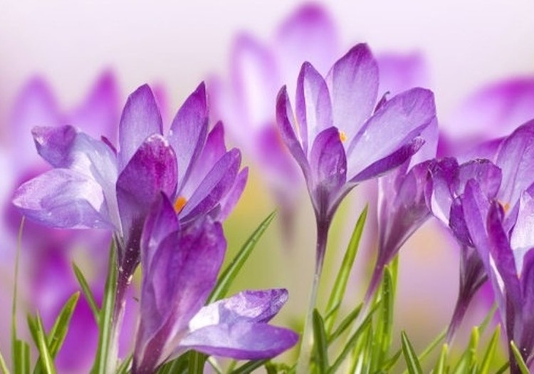 Pavasario blogas:Gera savijauta!