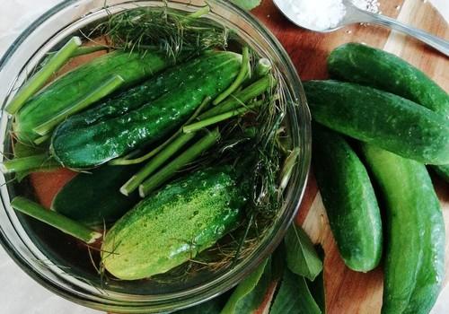 Gaivūs šviežiai parauginti agurkai