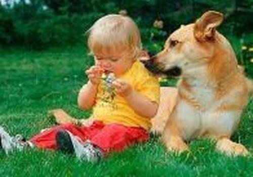 Ar atsisakyti šuniuko dėl kūdikio?