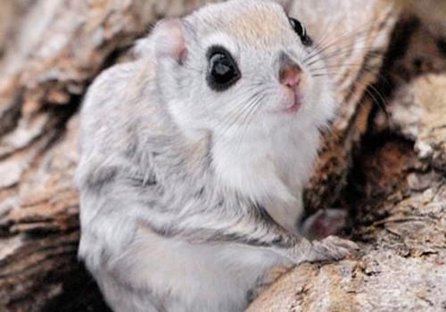 Koks mieliausias pasaulio gyvūnėlis?