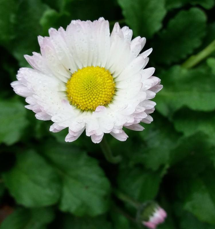 Rudens blogas: lapkričio gėlės:)