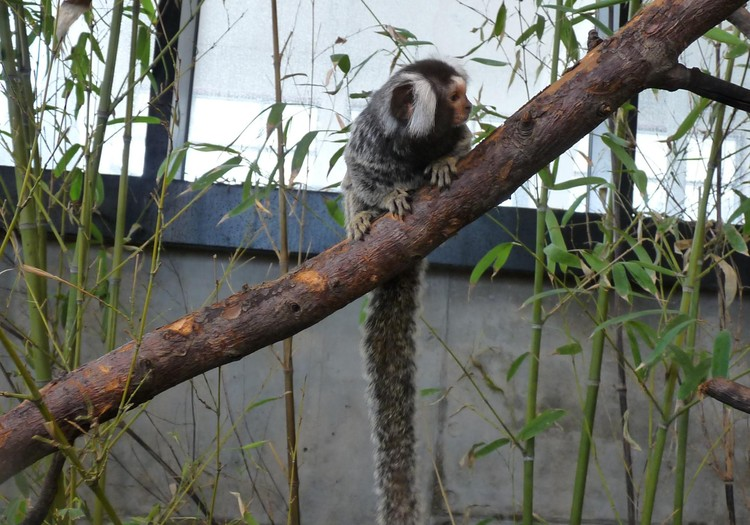 Gimtadienis zoo parke
