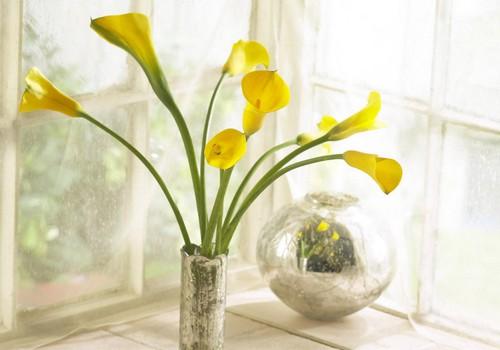 Kaip ilgiau išlaikyti pamerktas gėles: floristės patarimai