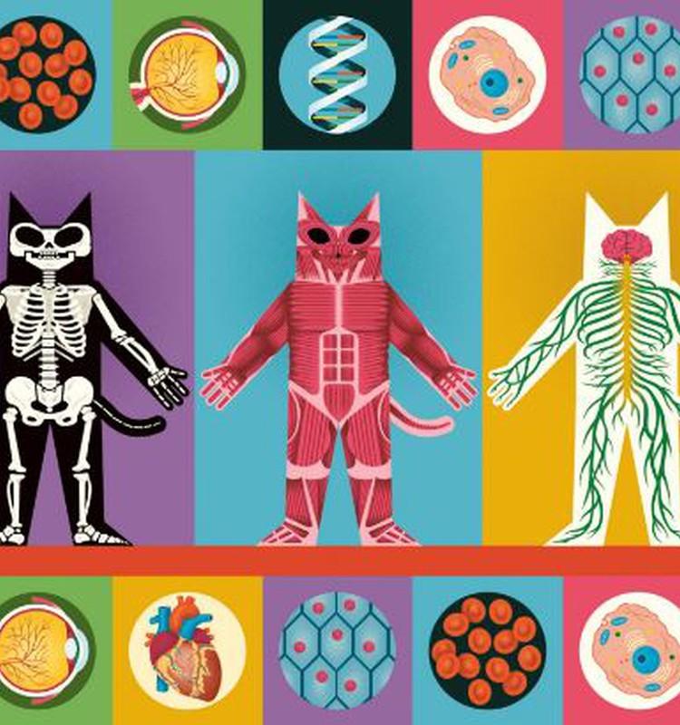 8 faktai apie žmogaus kūną: kaip pradinukus mokyti anatomijos?