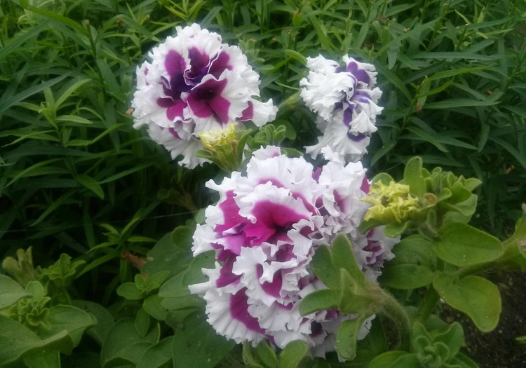AŠ IR GAMTA: eksperimentas su gėlėmis :)