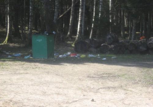 Niokojama gamta Gulbinų miškelyje