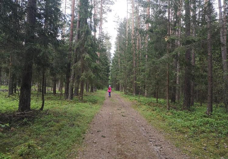 Miško turtų pažintinis takas