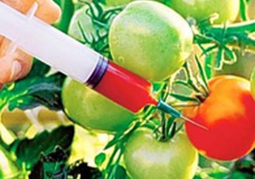 GMO – siaubas ar tik gamybininkų išsigelbejimas gaminant pigų produktą?