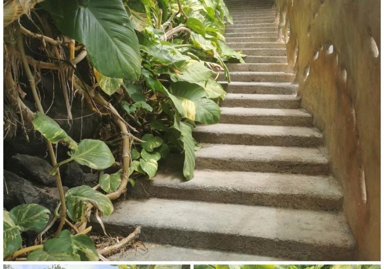 Vasaros gidas: Ekskursija su gidu į bananų plantacijas (La Palma)