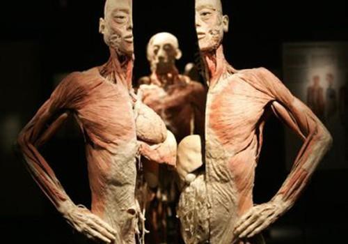 Šiandien atsidaro kontroversiška Žmogaus kūno paroda