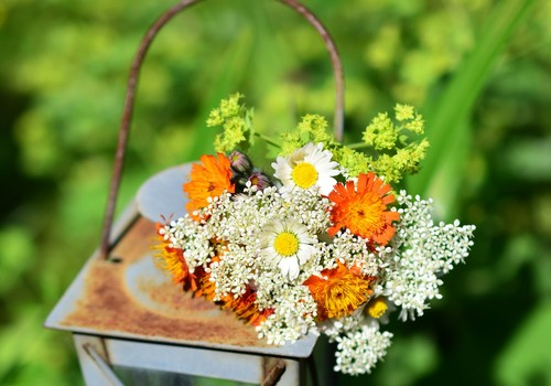 Alergiškiems žmonėms ŽOLINĖS puokštę reikėtų rinkti atsargiai: kokių augalų vengti?