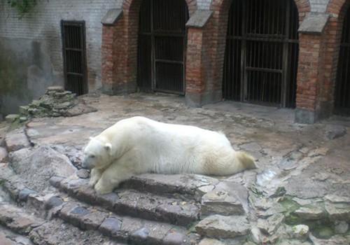 Kiekvieną vasarą – į Zoologijos sodą!