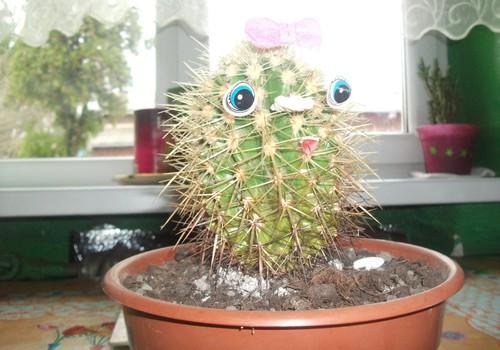 """Mažosios Godytės ir jos mamytė naujai atgimęs kaktusas """"mergytė"""""""