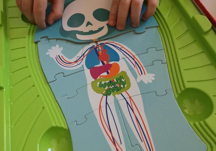 Vaikai ir stalo žaidimai. Mokomės anatomijos