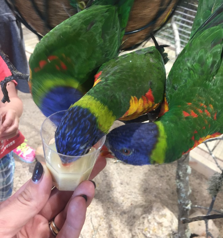 Godos blogas: Kaune atsidarė zoo, kur galima maitinti gyvūnus