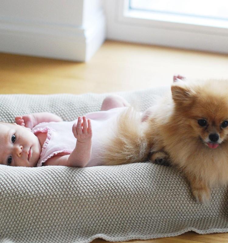 Naujagimis ir gyvūnas namuose