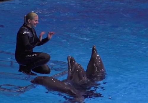 Kuo ypatingi delfinai?