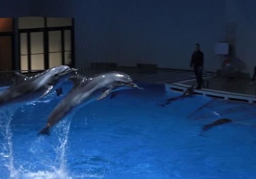VIDEO: Kaip delfinai rūpinasi savo mažyliais?