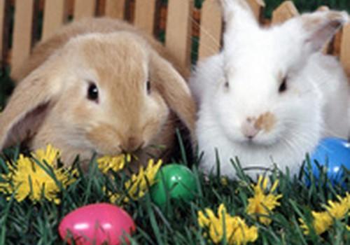 Linksmiausios Velykų popietės su kiškiu Velykiu ir bobute!