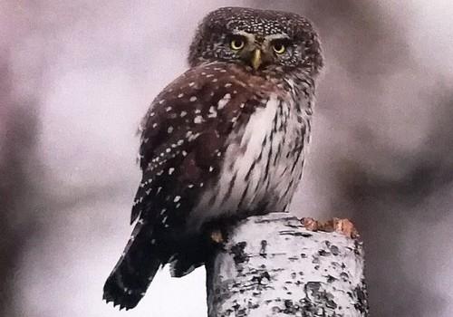 TOKIA MŪSŲ KASDIENYBĖ. 40 - ties paukščių diena