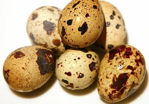 Kada mažyliui galima duoti putpelių kiaušinių?