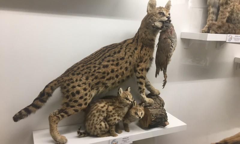 Vasaros gidas: Kauno zoologijos muziejuje