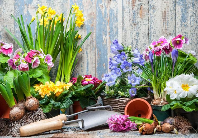 Pavasario blogas: Vasaros šaukliai