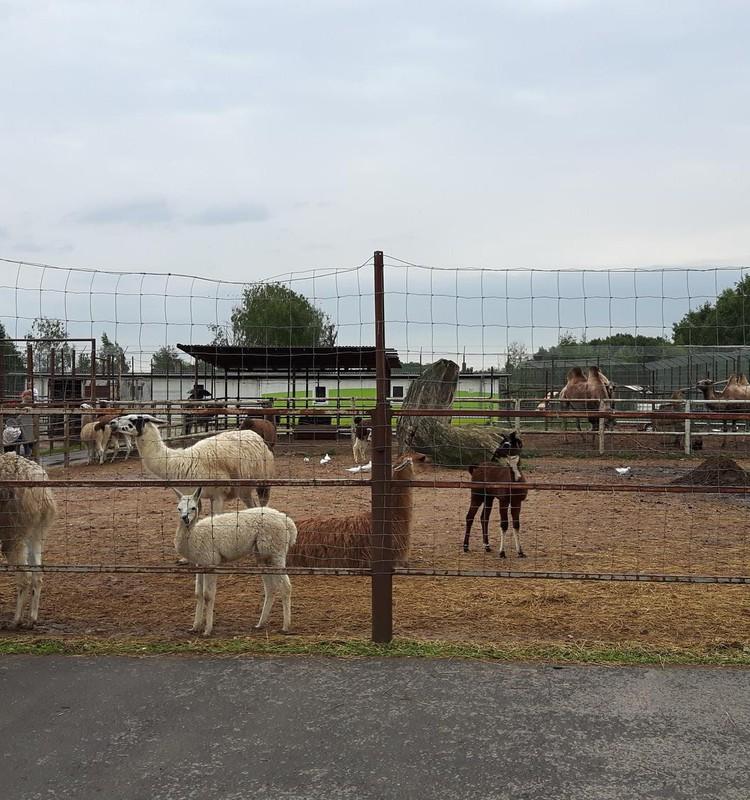 Klaipėdos zoologijos sode