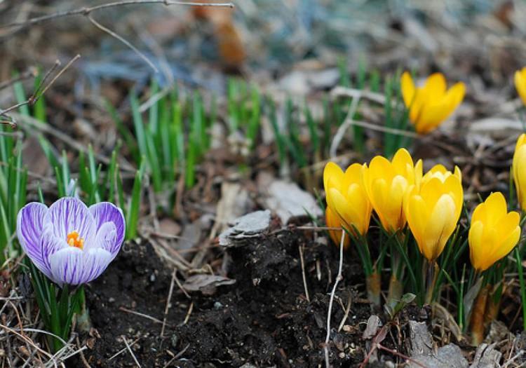 Konkursas: Koks pavasaris tavo kieme?!