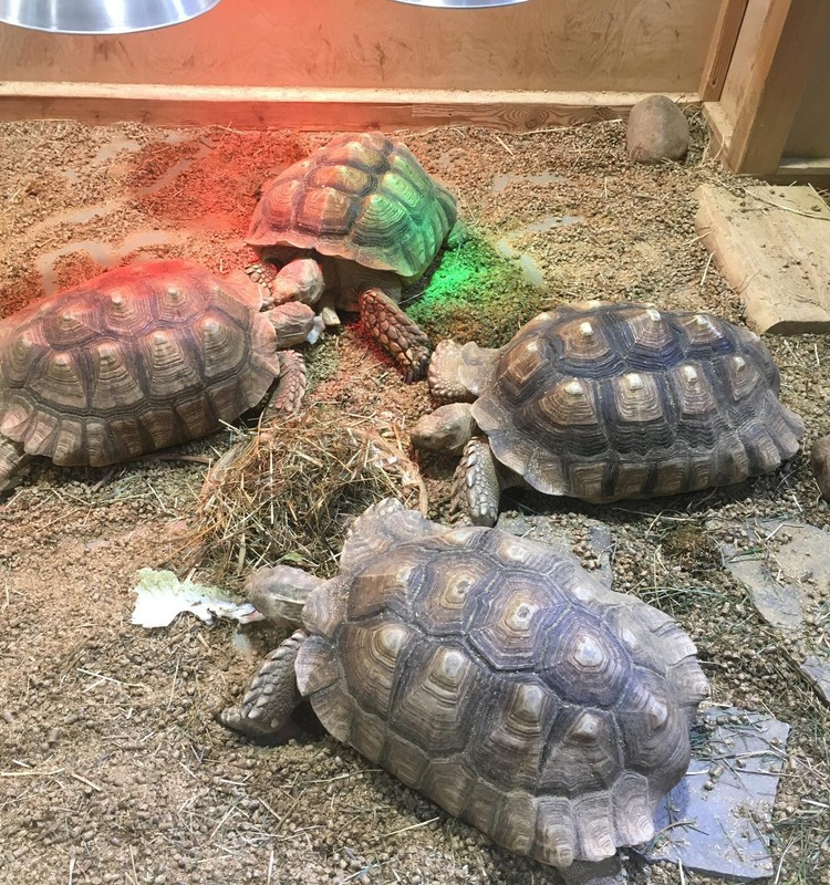 Vasaros gidas: Zoopark Kaune