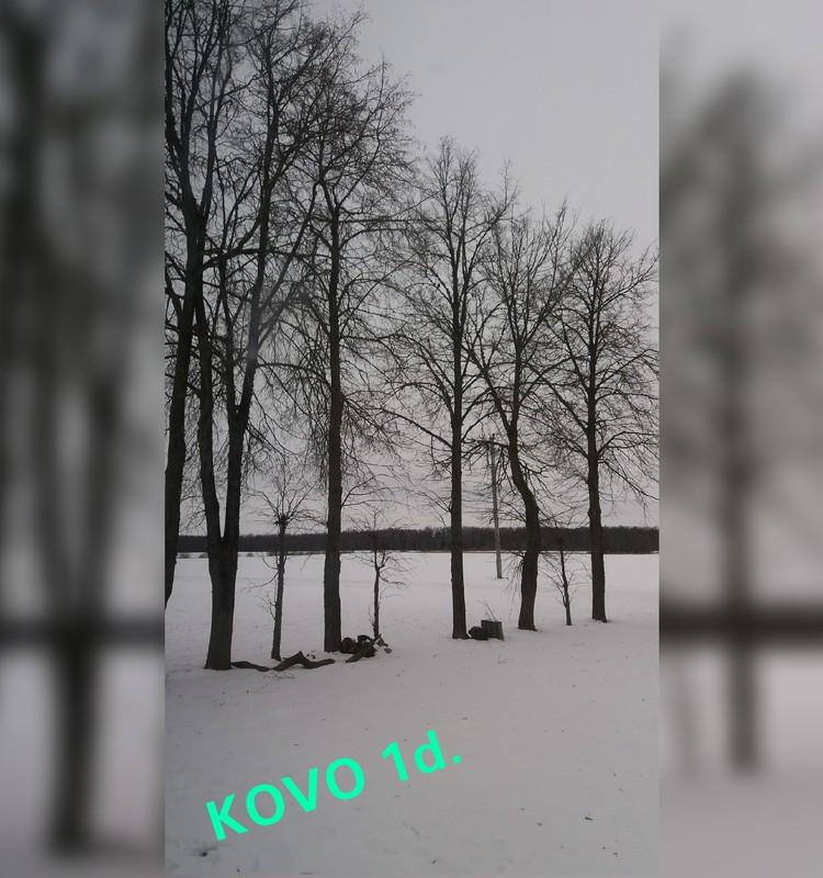 Pavasario blogas: sniegas,rūkas,šaltis..... :)