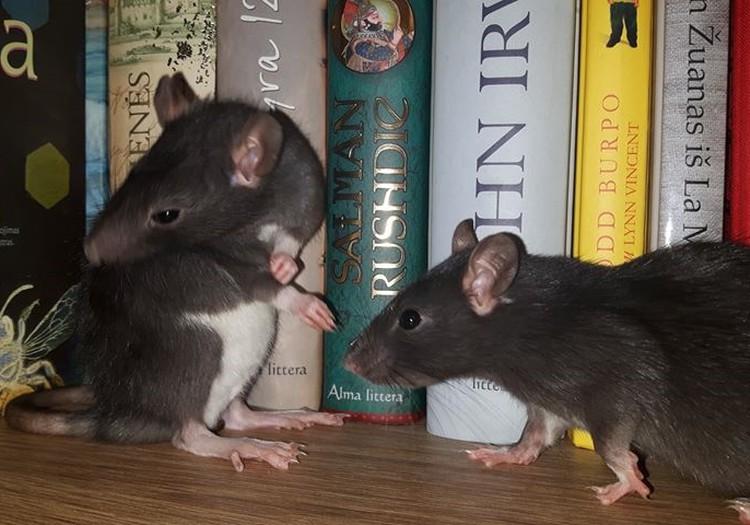 Fantastiškų (-os) knygų žiurkės - vienykimės!