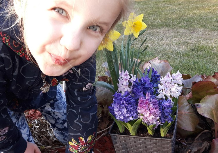 Kaip anksti namuose pražydinti tulpes, narcizus, hiacintus, krokus