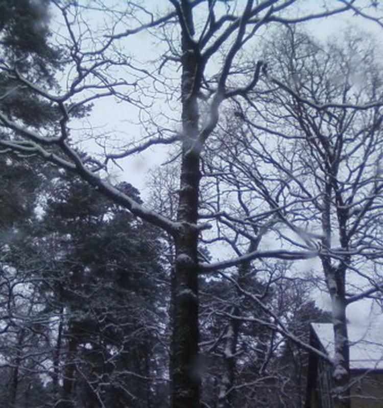 Snieguotas vakaras