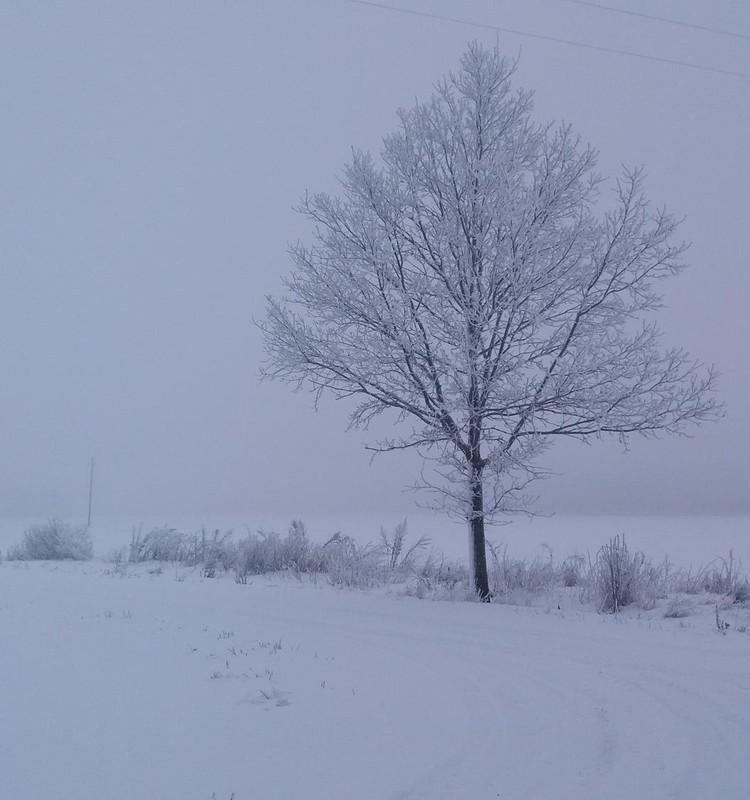Žiemos ritmu: žiema žiemoje :D