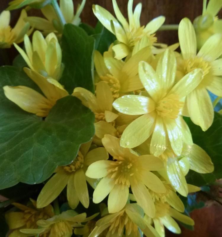 Pavasario blogas: šilumos džiaugsmai :)