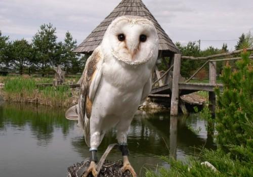 VIDEO: Pelėdų parke - įdomi pažintis ne tik su pelėdomis