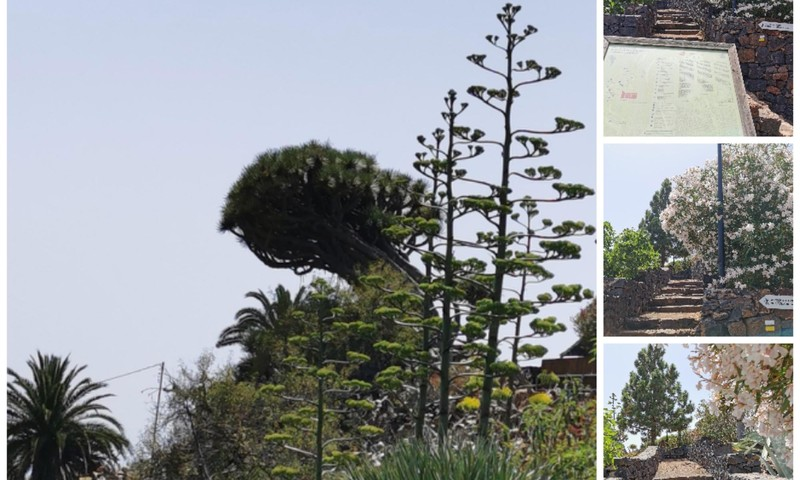 Vasaros gidas: Drakono palikuonys (La Palma)