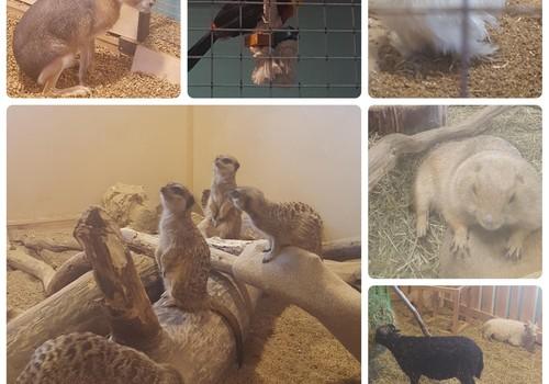 BROLIUKŲ PAVASARIS: įspūdžiai iš Zoo parko Megoje