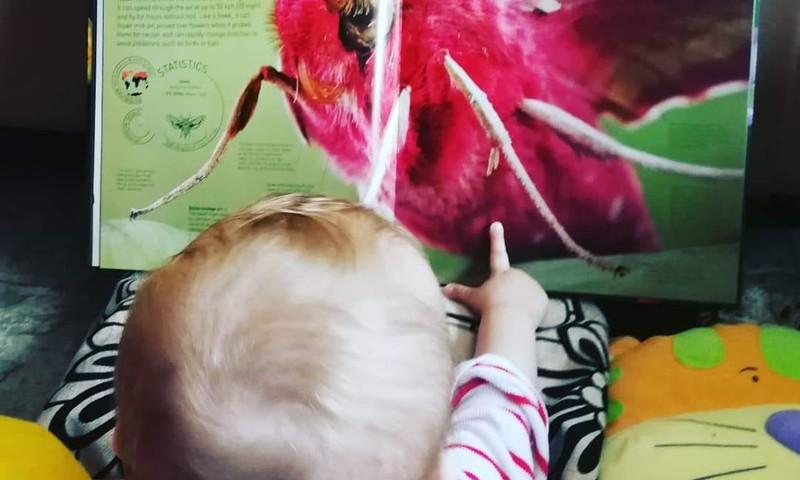 Pažintis su vabzdžiais: knygos, figūrėlės ir mobili programėlė