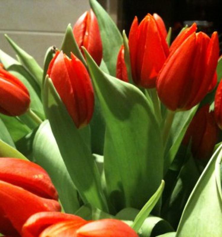 Tulpių žydėjimo šventė Burbiškyje